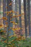 Skog i nedgång Fotografering för Bildbyråer