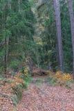Skog i nedgång Royaltyfria Foton