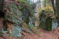 Skog i nedgång Arkivbild