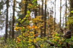 Skog i nedgång Royaltyfri Foto