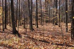 Skog i nedgång Arkivfoto