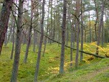 Skog i nedgång 4 Royaltyfri Bild