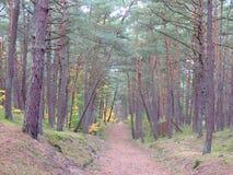 Skog i nedgång 56 Royaltyfria Foton