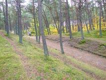 Skog i nedgång Arkivfoton