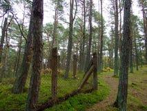Skog i nedgång 40 Royaltyfria Foton