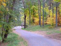 Skog i nedgång Royaltyfri Fotografi