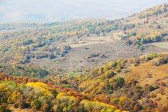 Skog i nedgången arkivfoton