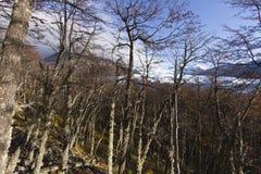 Skog i Patagonia, Argentina Royaltyfri Fotografi