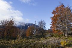 Skog i Patagonia, Argentina Royaltyfri Foto