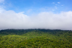 Skog i regnig säsong av Thailand Arkivfoto