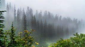 Skog i regnigt och dimmigt Arkivfoton