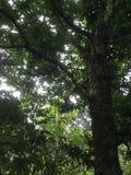 Skog i södra celebes Arkivfoto