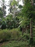 Skog i södra celebes Royaltyfri Bild