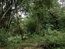 Skog i södra celebes Royaltyfria Foton