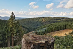 Skog i Sauerland, Tyskland, Europa Royaltyfria Foton