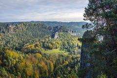 Skog i saxonen Schweitz Royaltyfri Bild