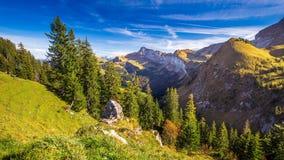 Skog i schweiziska fjällängar från Klewenalp berg, centrala Schweiz lager videofilmer