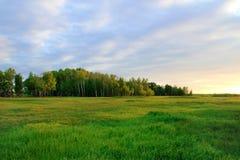 Skog i Sibirien mot en härlig solnedgång royaltyfria foton