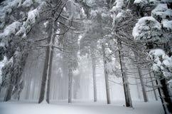 Skog i snö Fotografering för Bildbyråer