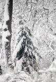 Skog i snö. Royaltyfria Bilder