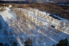 Skog i snövinter royaltyfri bild