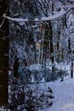 Skog i Snow Royaltyfri Foto