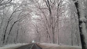 Skog i Snow Arkivbild