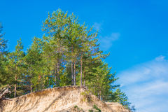 Skog i solig dag Royaltyfri Fotografi