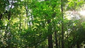 Skog i soligt väder lager videofilmer