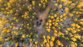 Skog i solljus Fotografering för Bildbyråer
