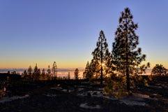 Skog i solnedgång ovanför molnen Arkivbilder