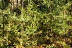 Skog i sommar Royaltyfria Foton