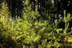 Skog i sommar Arkivfoton