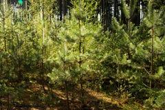 Skog i sommar Royaltyfri Bild