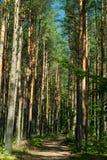Skog i sommarsolen Arkivbild