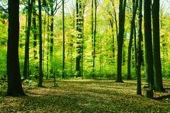 Skog i springtime Arkivfoton