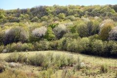 Skog i springtime skogbakgrund, blomningträd, vår Royaltyfri Bild