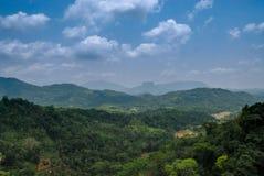 Skog i Sri Lanka arkivbild