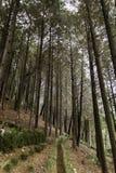 Skog i templet busan Korea Arkivfoto