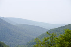 Skog i uddebretonen Royaltyfri Bild