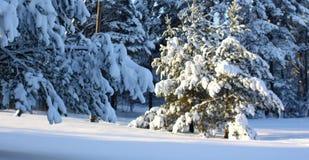 Skog i vinter Royaltyfri Fotografi