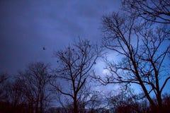 Skog i vinter arkivfoton