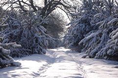 Skog i vinter. Arkivbild