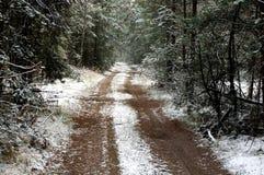 Skog i vinter. Royaltyfria Bilder