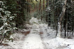 Skog i vinter. Royaltyfri Fotografi