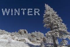 Skog i vinter Arkivbilder