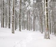Skog i vinter fotografering för bildbyråer
