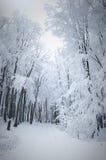 Skog i vinter Arkivbild