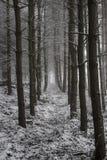 Skog i vinter Royaltyfri Foto