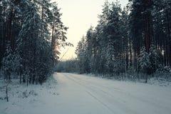 Skog i vinter Arkivfoto